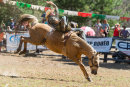 BODDINGTONRODEO2014-311-web