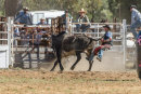 BODDINGTONRODEO2014-429-web