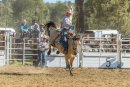 BODDINGTONRODEO2014-465-web