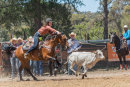 BODDINGTONRODEO2014-79-web