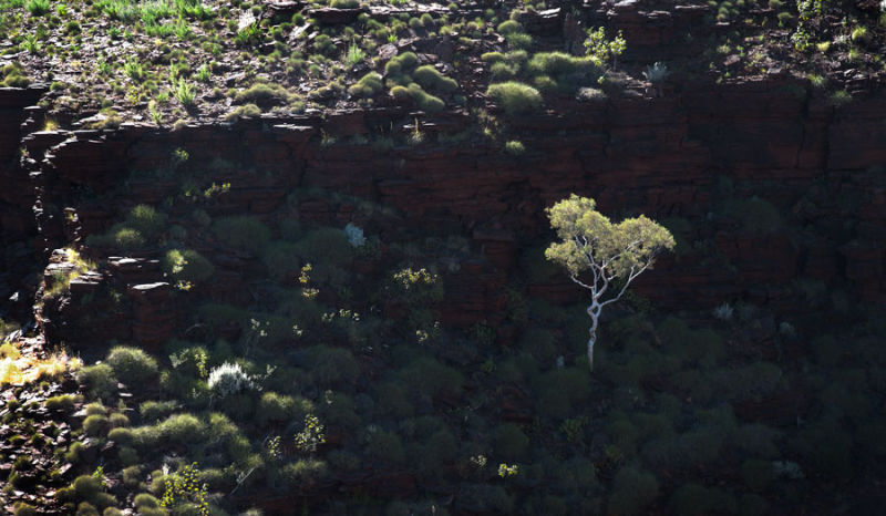 Junction Pool, Karijini