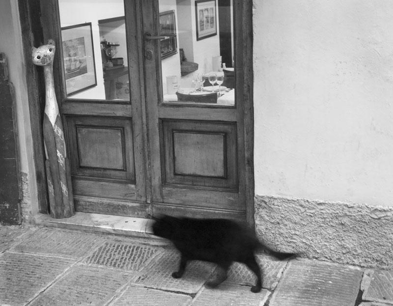 monterosso cat