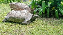 Arnold's Tortoise