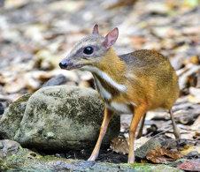 Mammals of Thailand