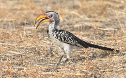 Birds of Hwange National Park, Zimbabwe