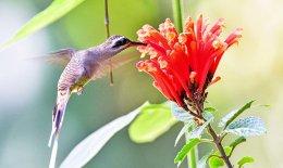 Birds of Los Cusingos, Costa Rica