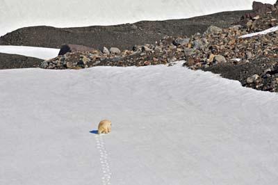 Our first Polar Bear.