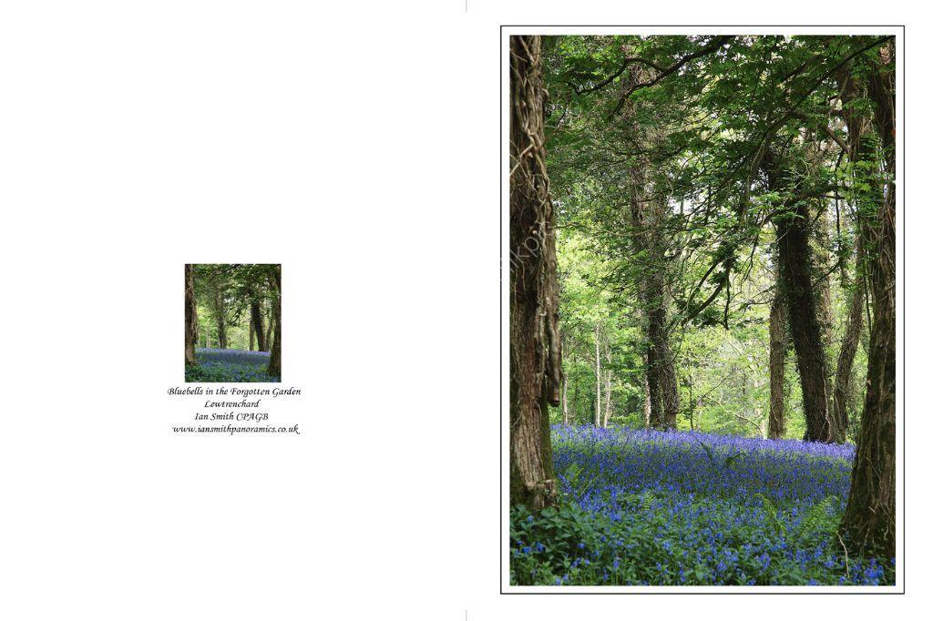 Bluebells in the Forgotten Gardens 1