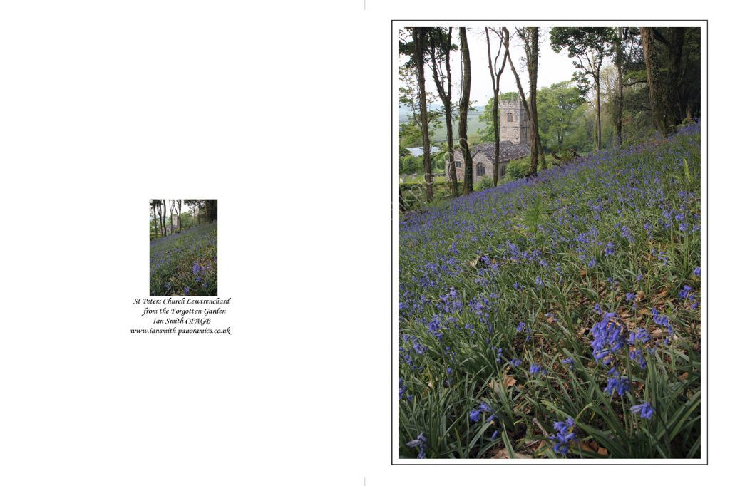 Bluebells in the Forgotten Gardens 2