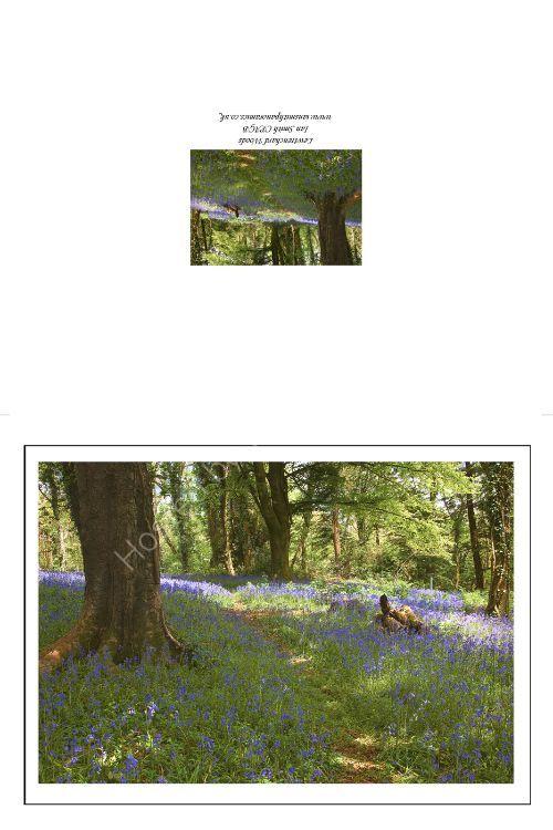 Bluebells in the Forgotten Gardens 3