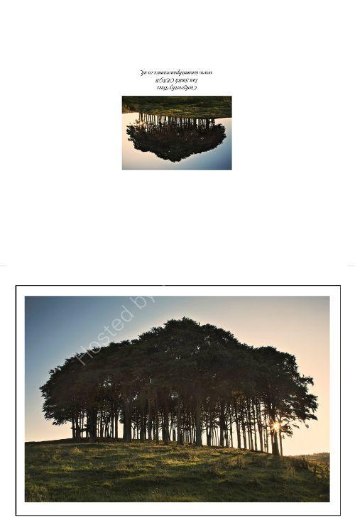 Cookworthy Trees Lifton Devon