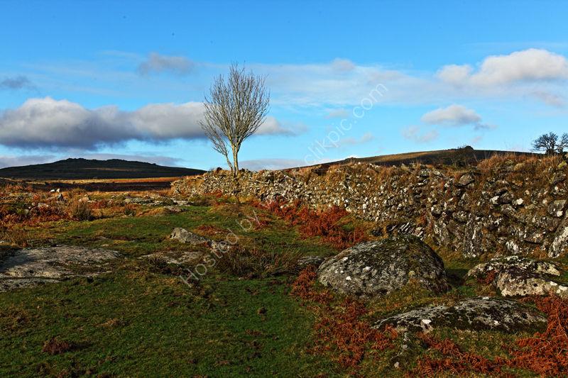 Cox Tor Dartmoor Devon