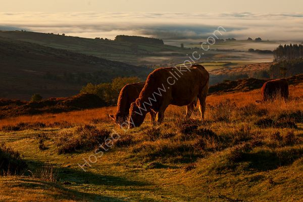 Early Morning Light Dartmoor