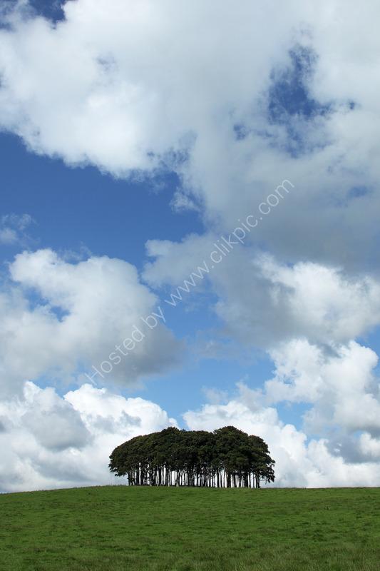 Cookworthy Trees Devon