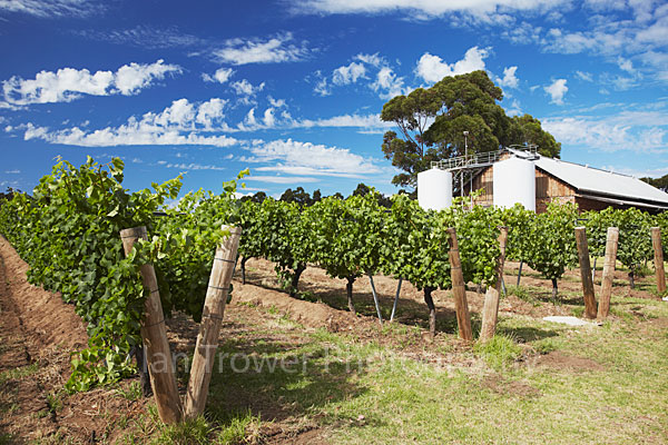 Vineyard, Margaret River