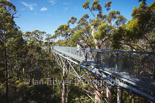 Tree top walk, Walpole