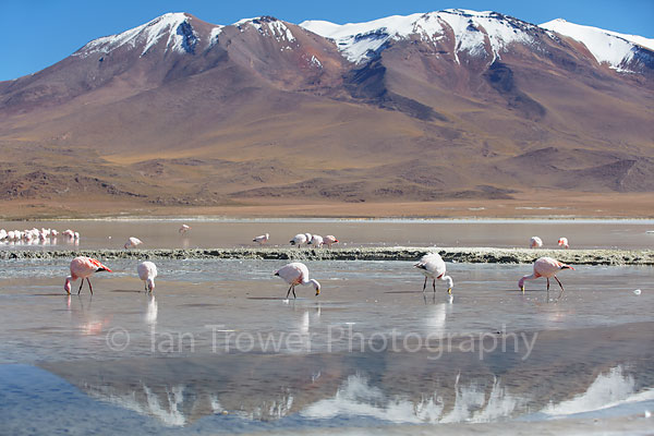 Flamingoes at Adeyonda Lake