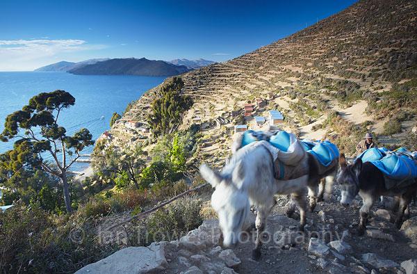 Shepherd with donkeys, Isla del Sol, Lake Titicaca