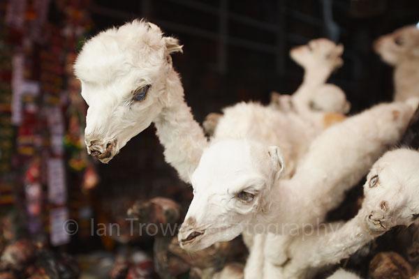 Stuffed baby llamas, La Paz