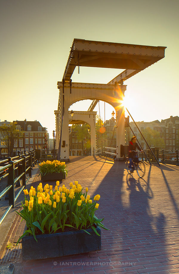 Cyclist crossing Skinny Bridge, Amsterdam, Netherlands