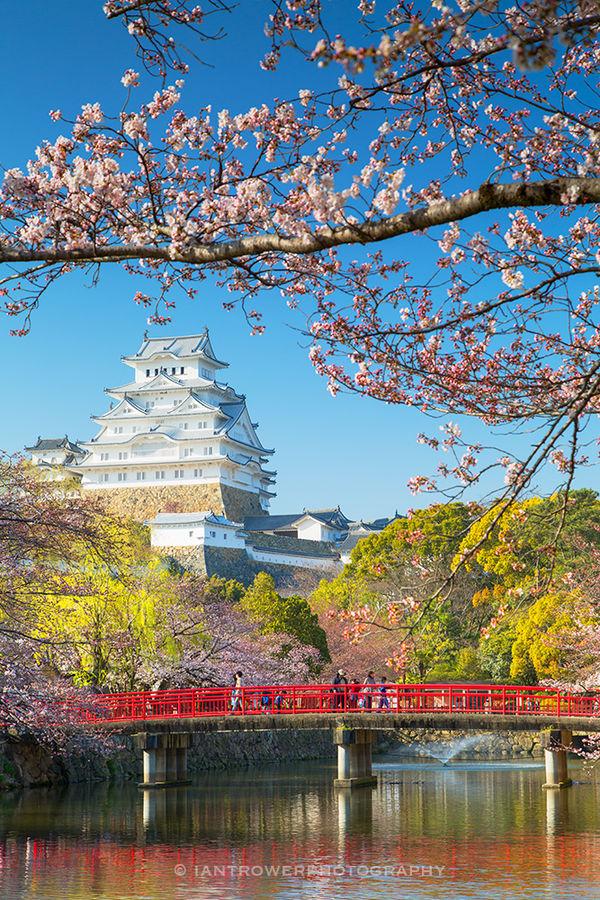 Himeji Castle with spring blossom, Japan
