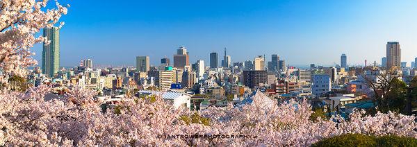 Sakura and skyline, Kobe, Japan