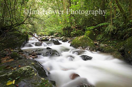 Stream In Kinabalu National Park, Sabah