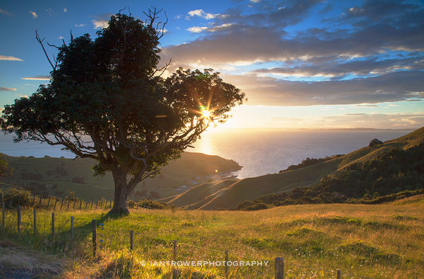 View of Firth of Thames at sunset, Coromandel Peninsula