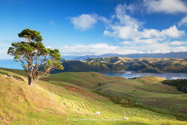 Landscape of Coromandel Peninsula, New Zealand