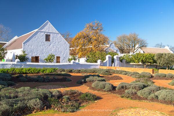 Babylonstoren Vineyard, Paarl, South Africa