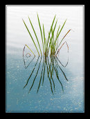 1st Fred Lowes Reed Reflection