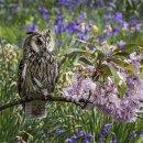 2nd. Springtime hunter