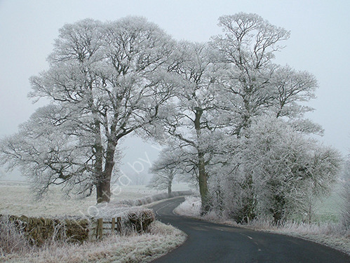 2nd. Hoar frost