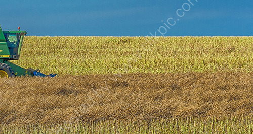 HC. Harvest