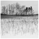 HC Reeds in Frozen Lake Idse Herrema