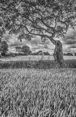 HC. Summer fields