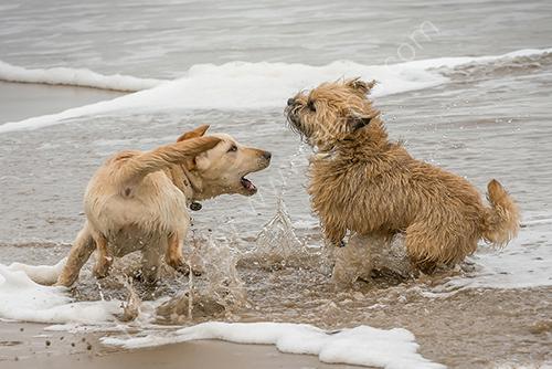 HC. Splashin' in the surf