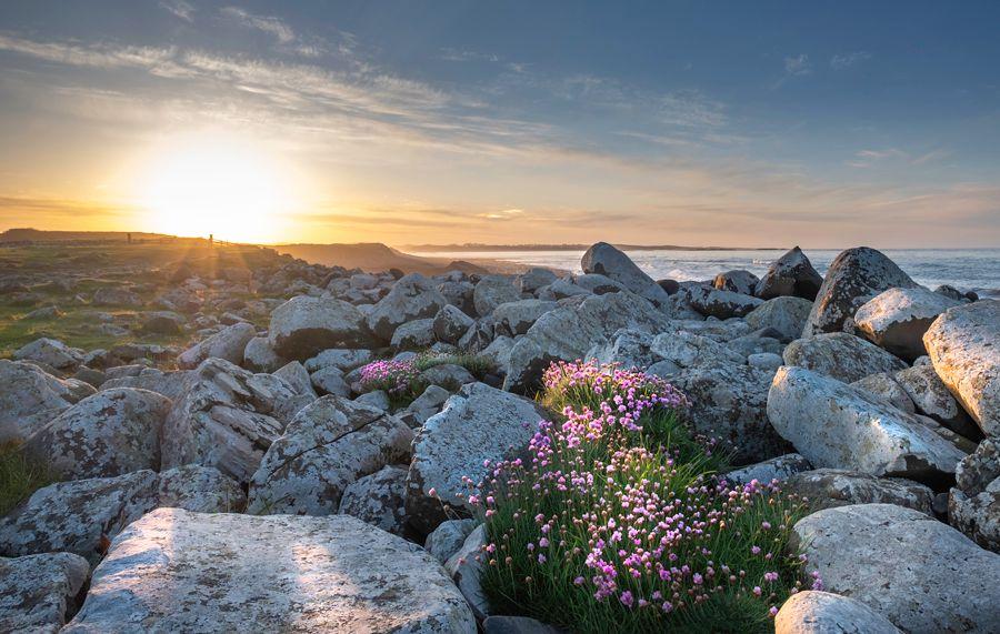 aa dunstanburgh rocks-flowers