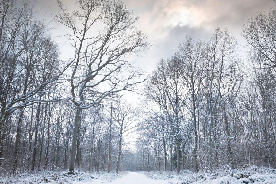 aa snow trees