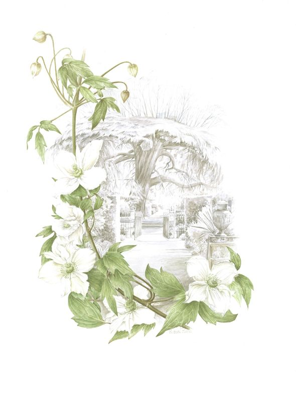 Clematis and Hidcott