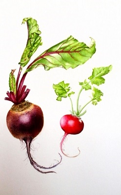 Beetroot and Radish