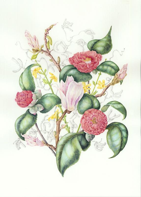Peony, Magnolia, Forsythia