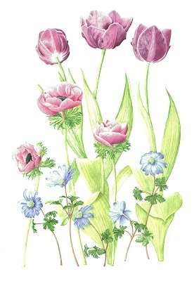 Mixed Floral Tulips Anemones