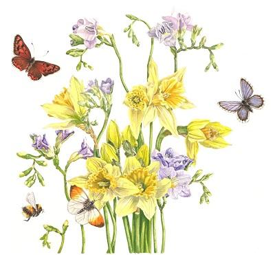 Freesia and daffodils