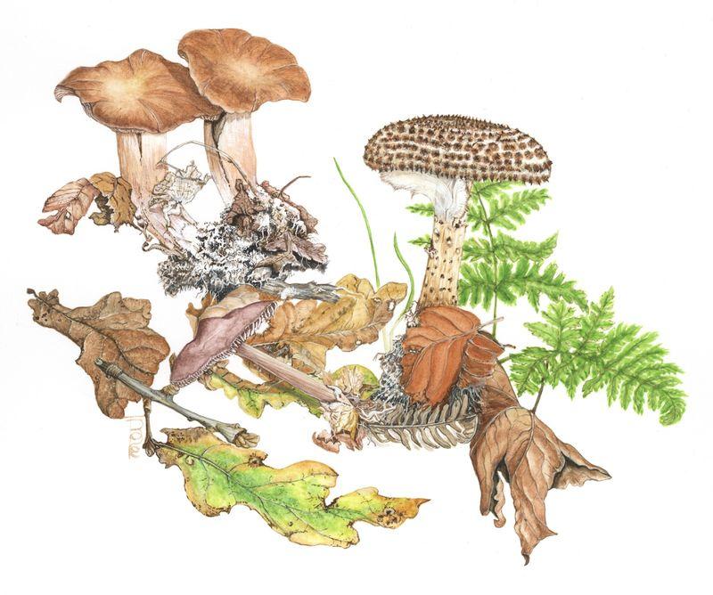 Fungi and Leaves