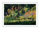 2385 Autumn colours