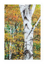 4936 Autumn woodland