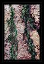 k788 Lichen on Scots pine