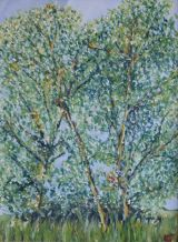 Norfolk Trees