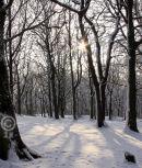 Fixby Woods